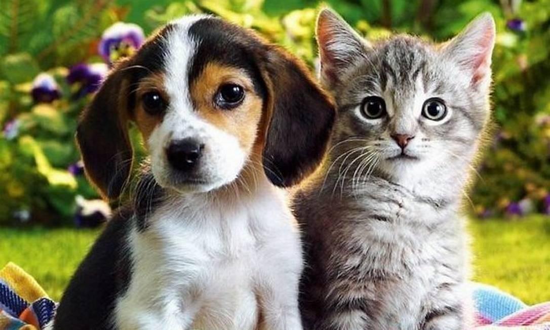 Entidades que cuidam de animais recebem doação de alimentos
