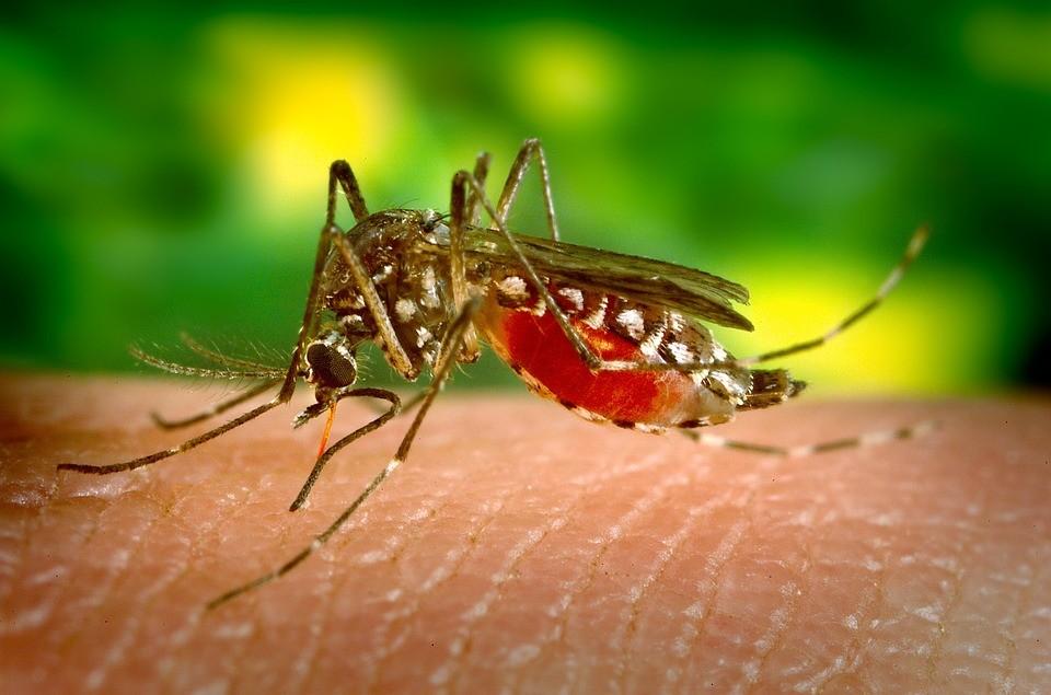 Estudantes usam tecnologia no combate ao mosquito da dengue