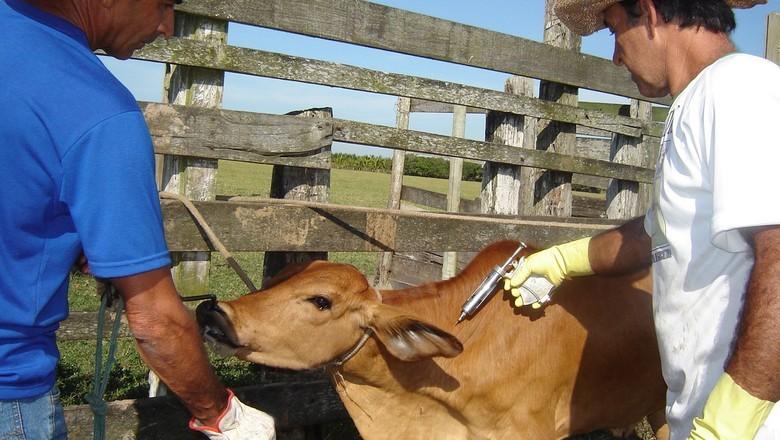 Novos casos de raiva em equinos e bovinos coloca em alerta autoridades de sanidade animal