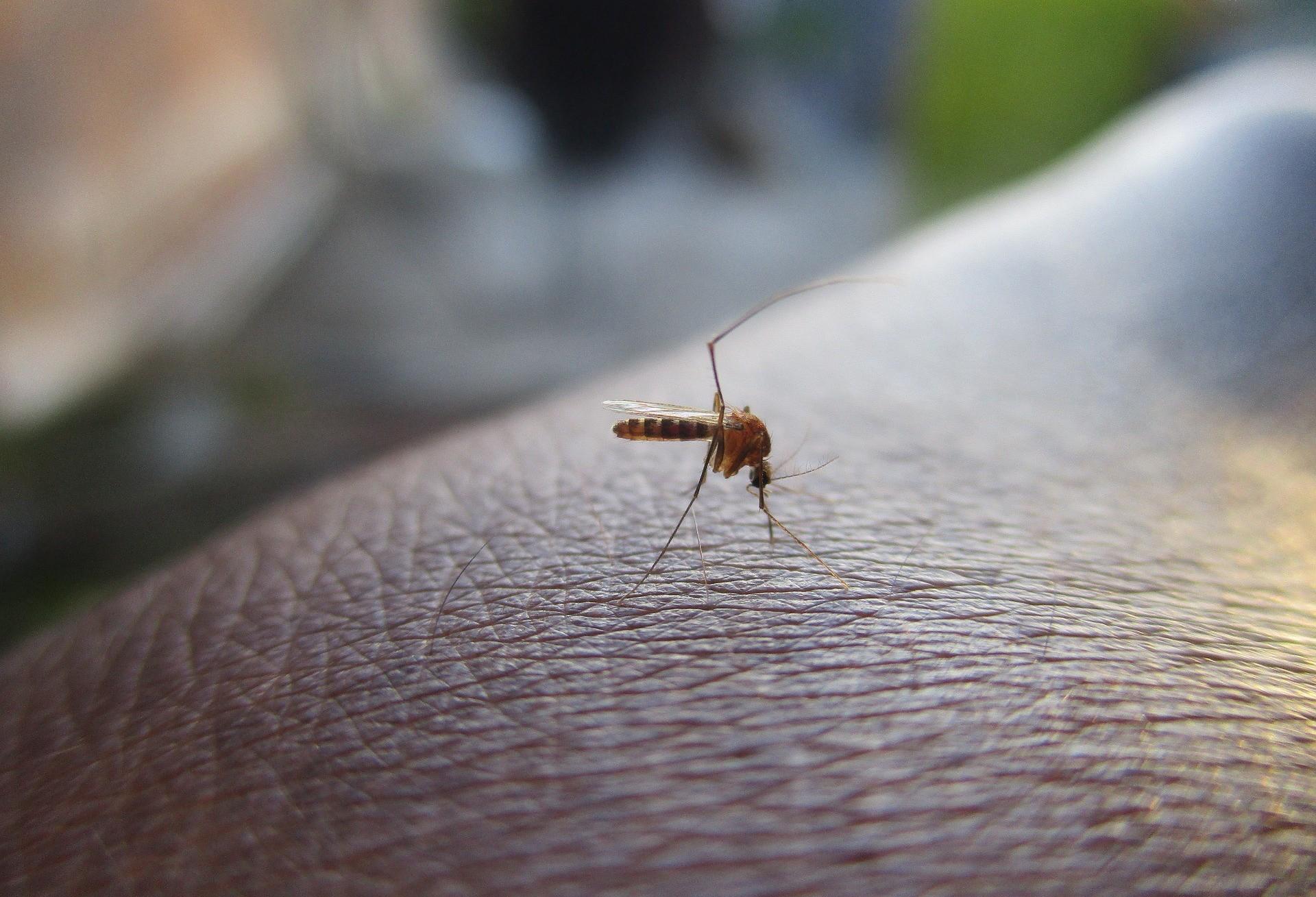 Cascavel confirma 28 casos de dengue em 51 dias do novo ciclo epidemiológico