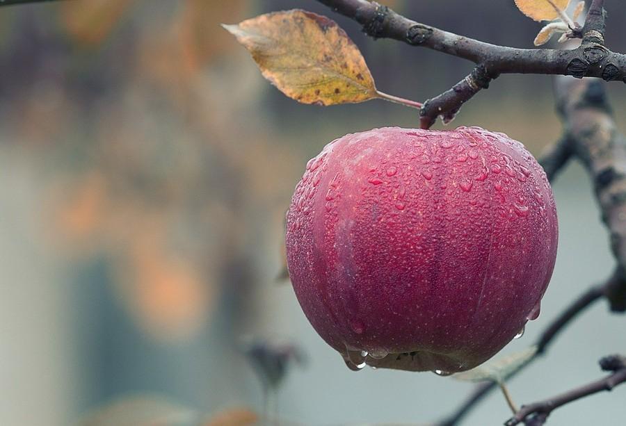 Brasil é o 3º maior produtor de frutas do mundo, mas exporta apenas 2,5% do que colhe