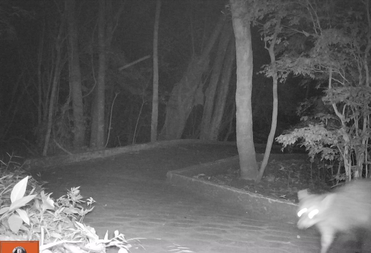 Onça ainda não apareceu em imagens de câmeras; lago e zoo estão fechados