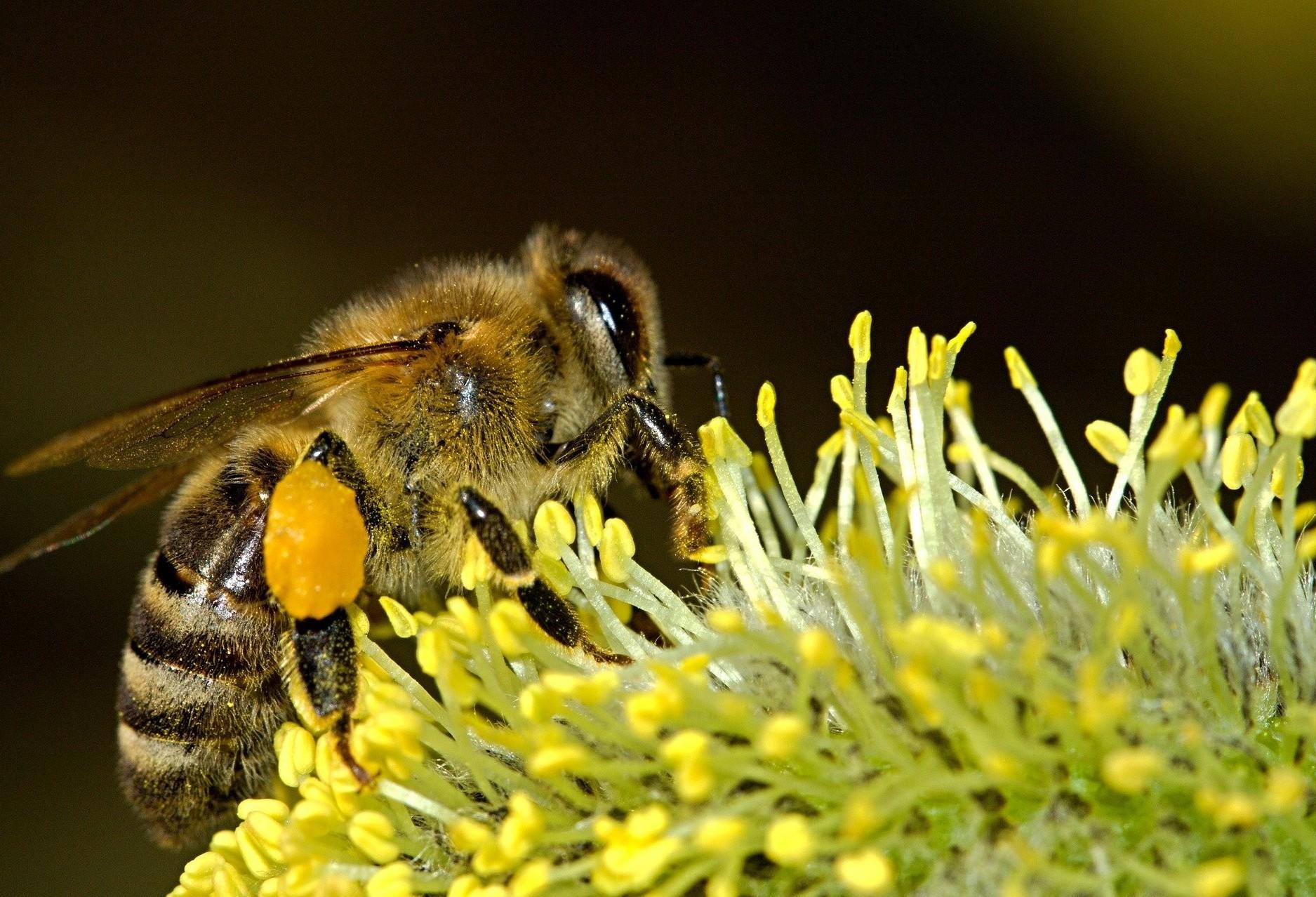 Defesa Civil alerta para surto de abelhas