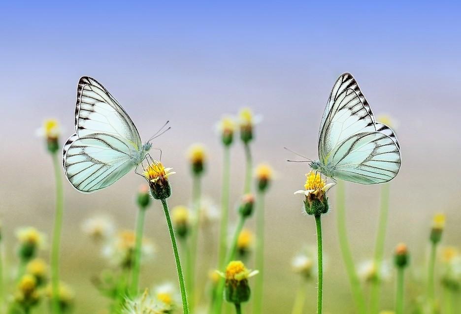 Dia da Natureza: Meio ambiente tem sido vítima de grandes impactos
