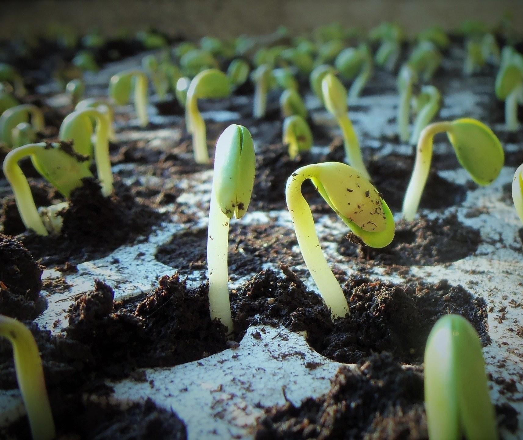 Brasil deve colher 133 milhões de toneladas de soja