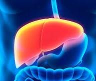 PRF transporta fígado para UOPECCAN