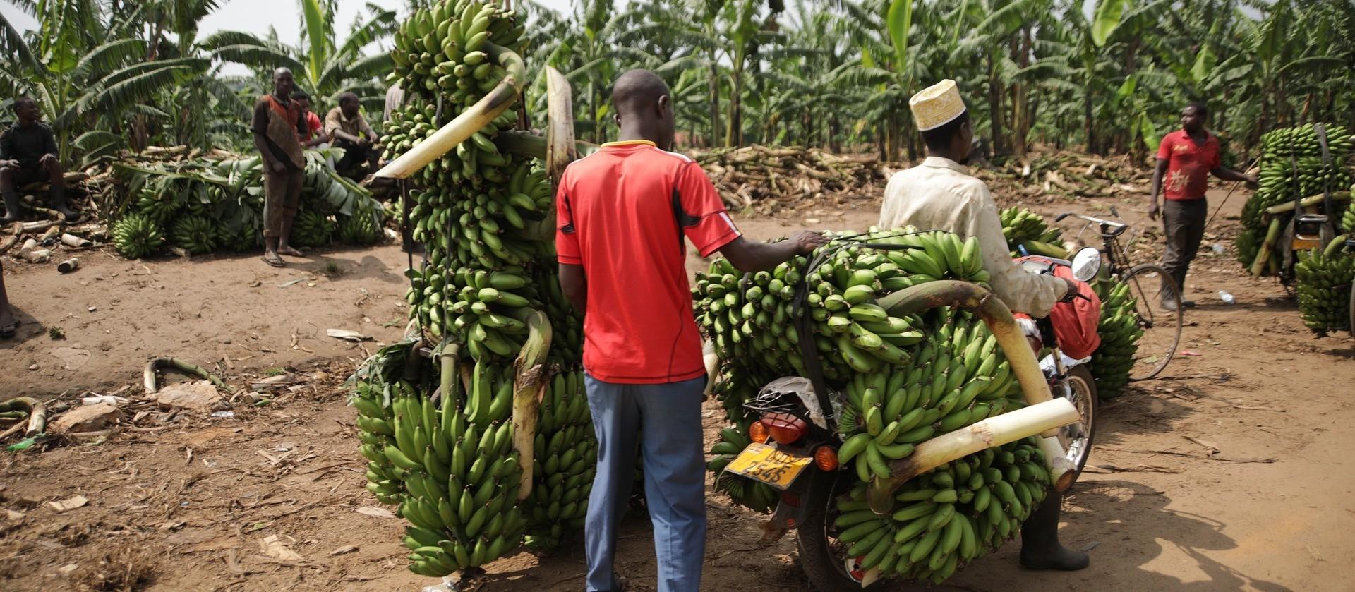 Artesanato sustentável de bananeira