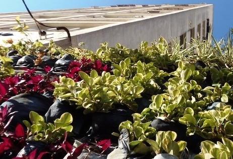 ONG de São Paulo integra a natureza às cidades